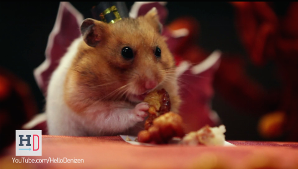 A Tiny Hamster Thanksgivin